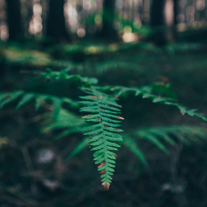 Wald hinter dem Ferienhaus in Holzhau