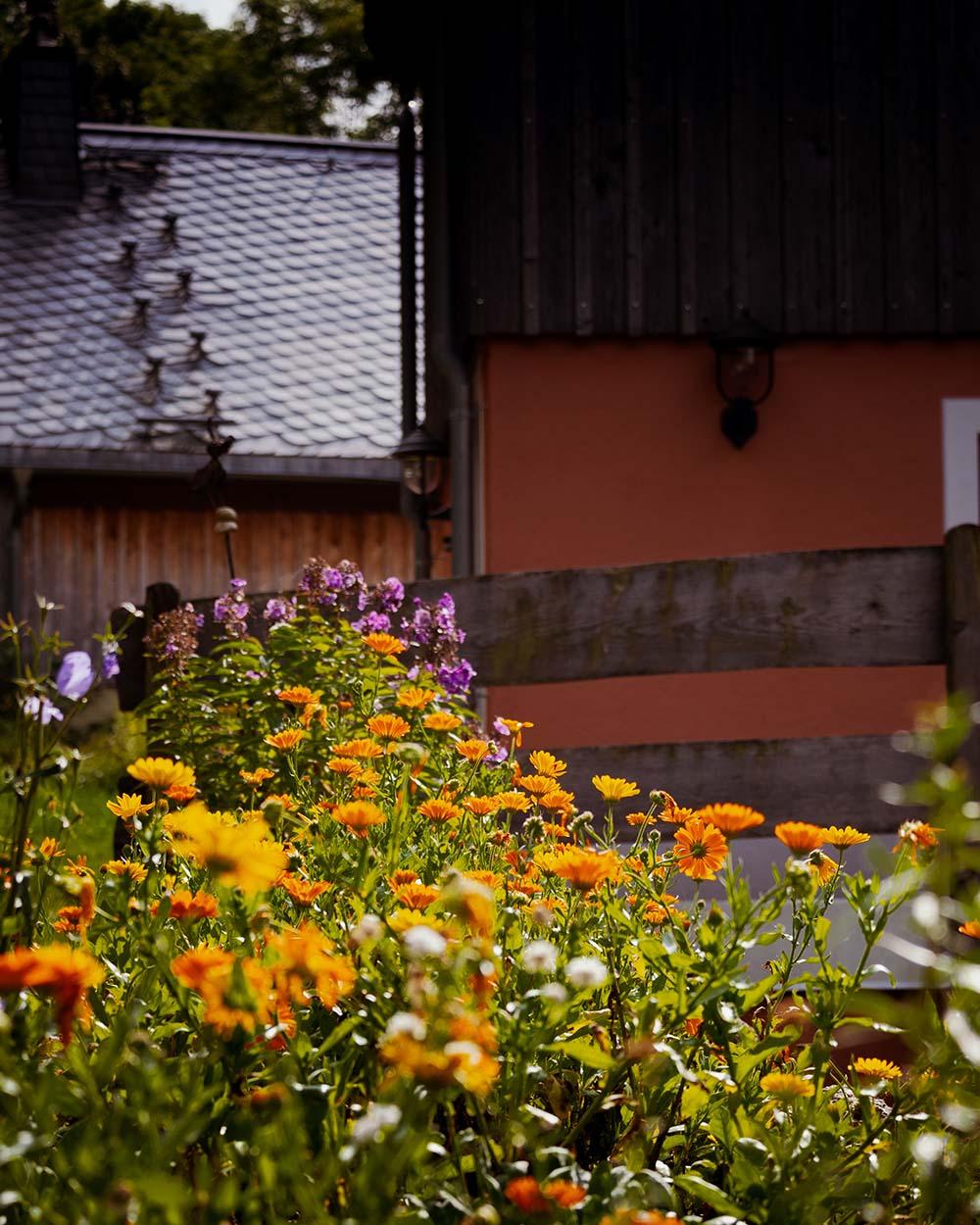 Natur am Haus